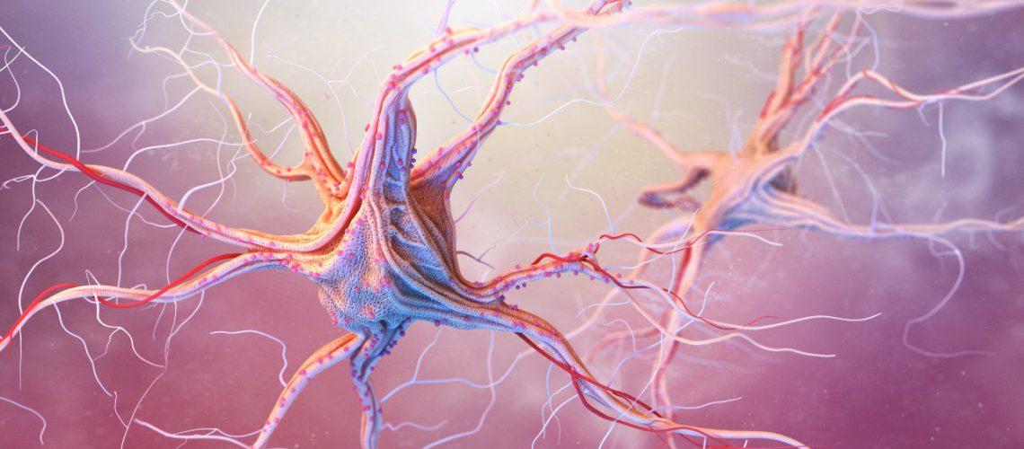 neurons-and-nervous-system-PYYJFWU (1)